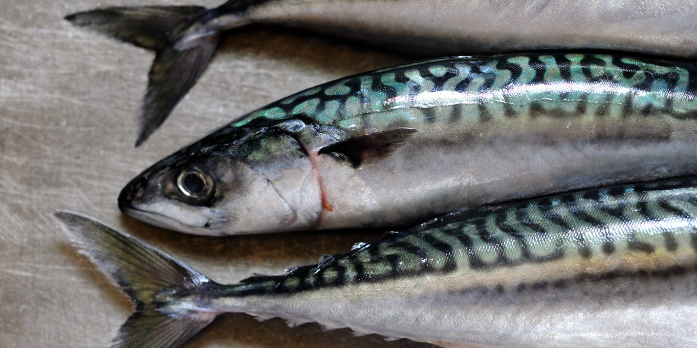 Good Reasons Why Diabetics Should Eat Mackerel